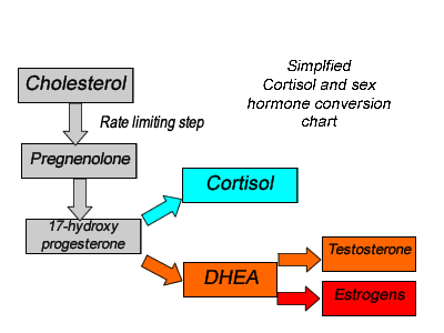 cholesterol to cortisol pathway chart