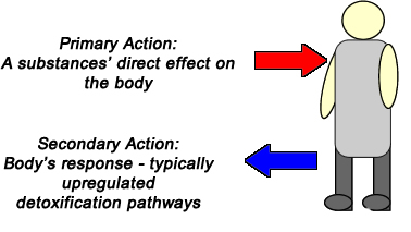 Picture - Primary and second action of substance on the body